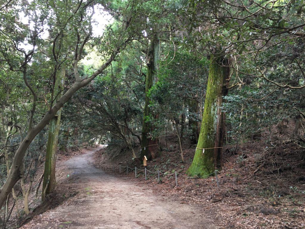 熊山天然杉