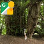日本の巨木ベスト5