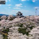 岡山県赤磐市周匝茶臼山城の桜写真