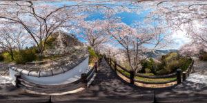 桜の観光地のストリートビュー写真